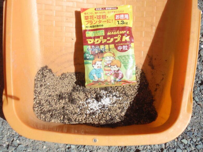 マンゴーの種 土植え材料3
