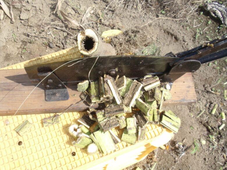 ひまわりの根元部分は乾燥すると木質化してとても固くなっています。